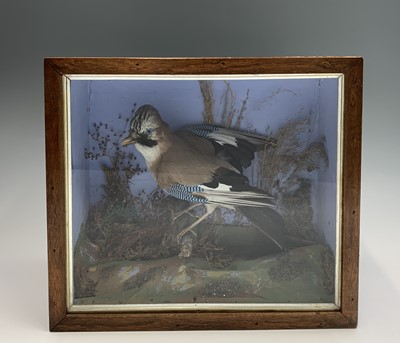 Lot 7 - A Victorian taxidermy display, a jay on a...