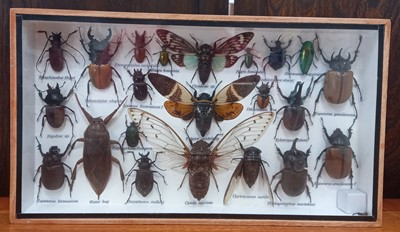 Lot 22 - Natural History/Entomology - A glazed display...