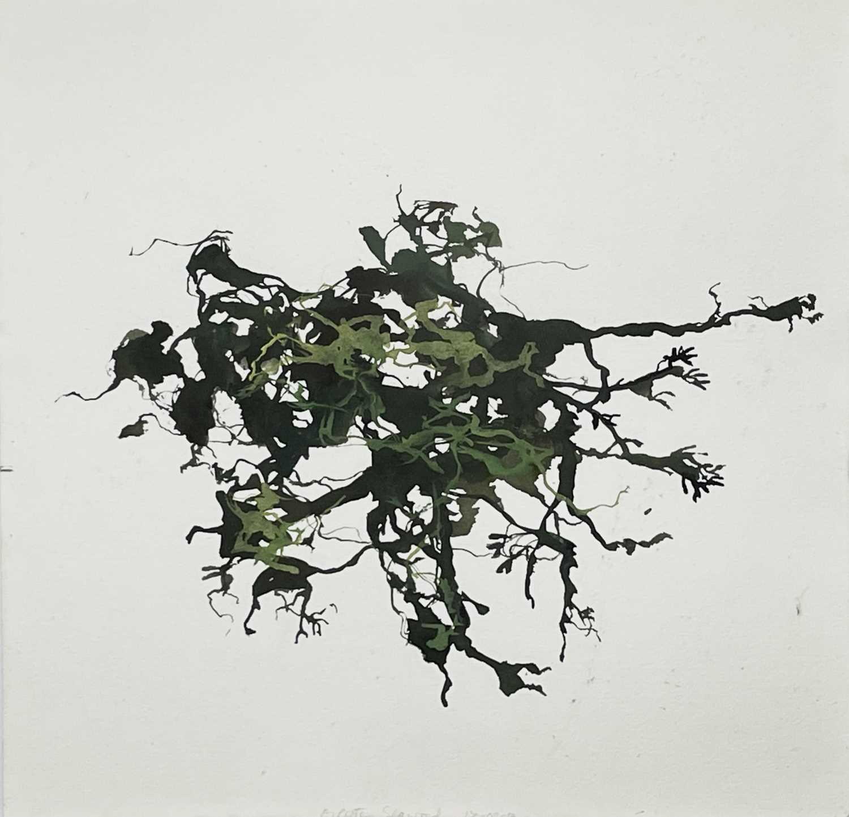 Lot 344 - Michael PORTER (1948) Seaweed Gouache Signed,...