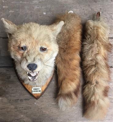 Lot 3-A 20th century taxidermy fox mask on oak shield,...
